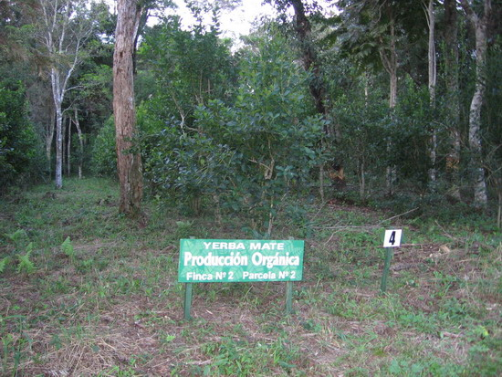 plantacja organiczna